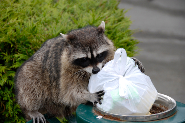 Getting Professional Wildlife Removal