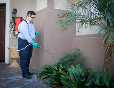 A Guide to Choosing a Pest and Wildlife Control Company in Green Valley City