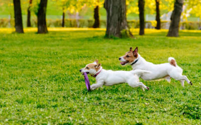 Tips to Anyone Seeking the Leading Canine Breeding Services