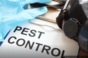 Get Rid of Pests as Soon as Possible