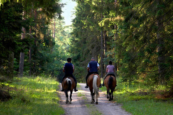 Tips for Planning a Horse Riding Tour