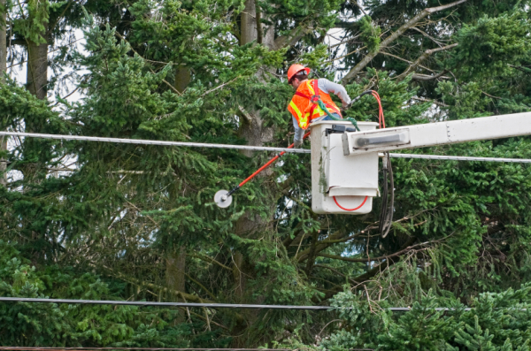 Why Tree Removal Services are Important