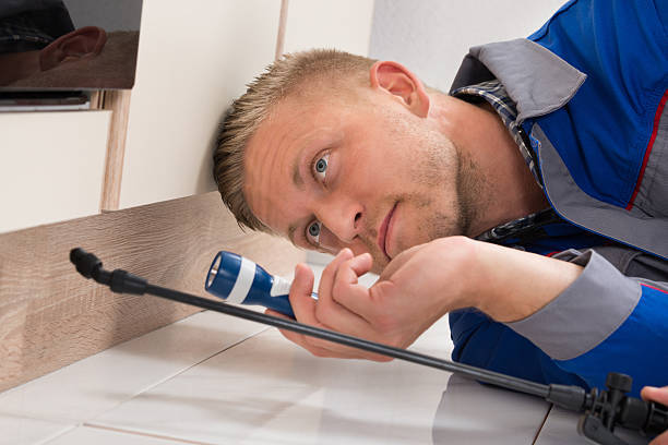 How to Hire a Reputable Pest Management Company