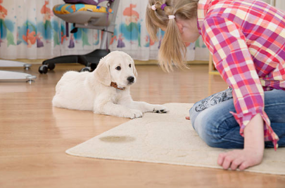 Training Information that Will Be Useful for Your Puppy