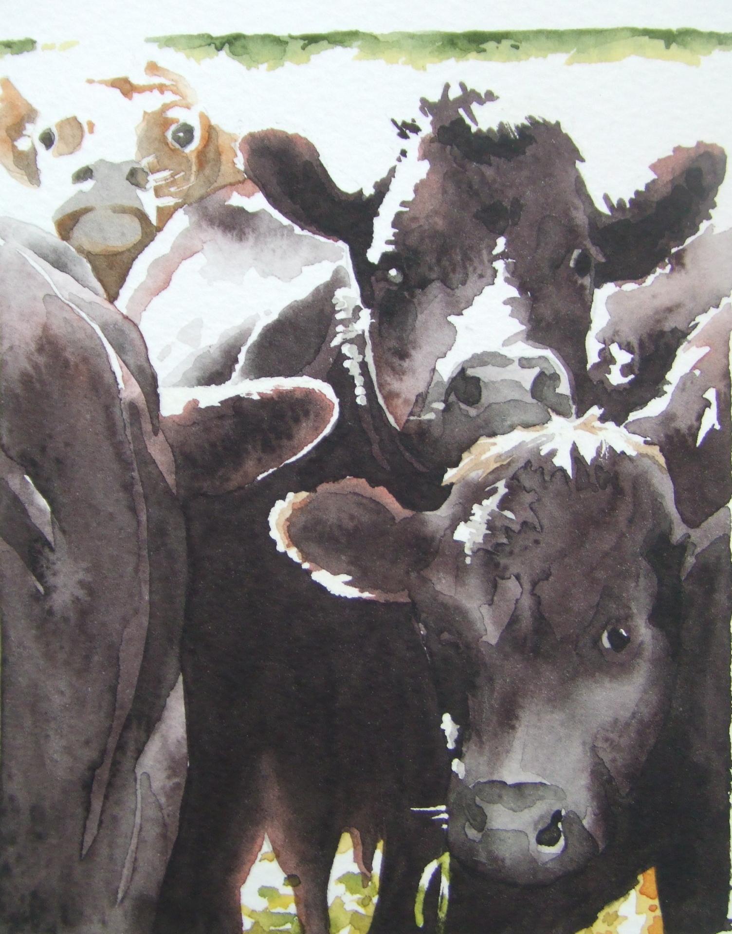 Dark cows in a bright field