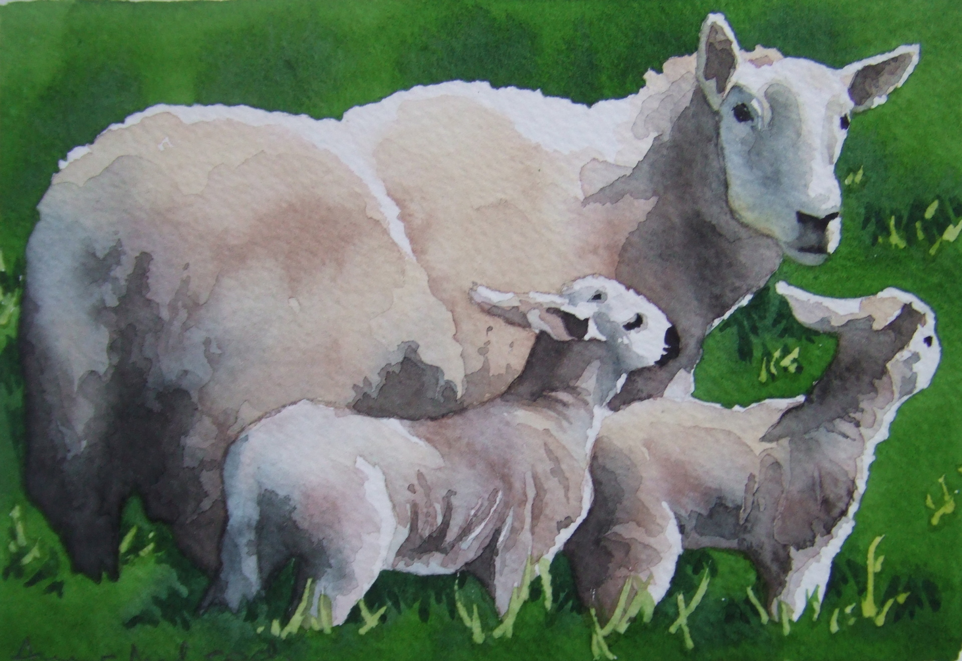 Ewe with twins