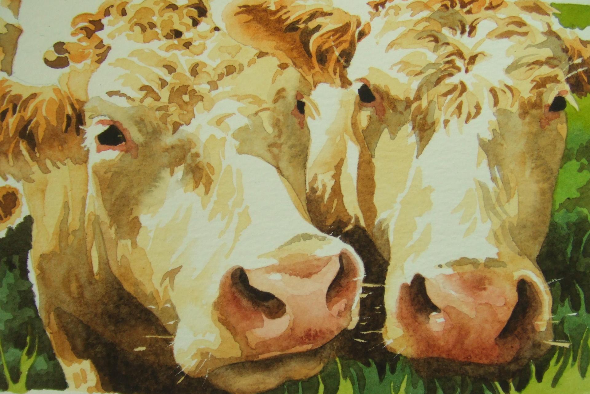 Two cream cows