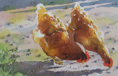 Two hens pecking