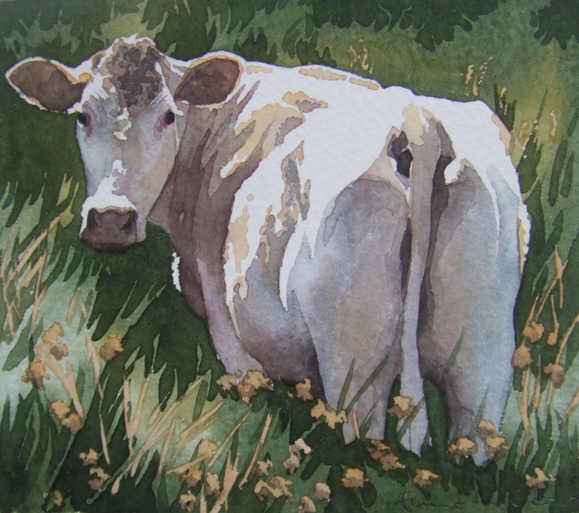 White cow in the rushes
