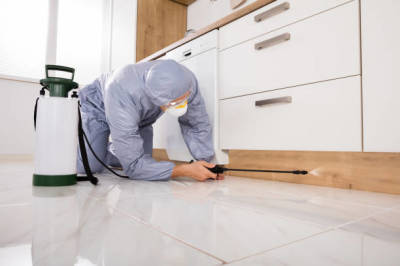 The Best Pest Control Services in Fort Mill SC.