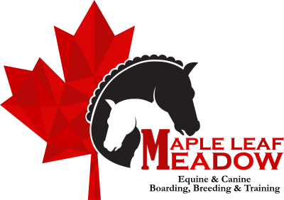 Eventing - Training - Houston | Maple Leaf Meadow