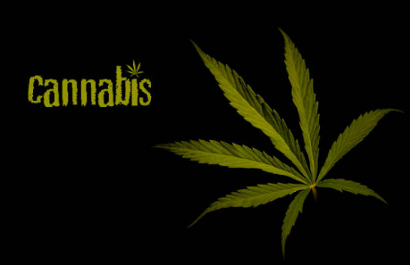 Essential Tips in Picking the Best Cannabis Dispensary