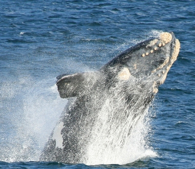 киты кейптаун