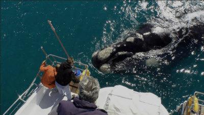 сезон китов юар
