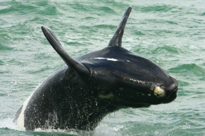 сезон китов кейптаун