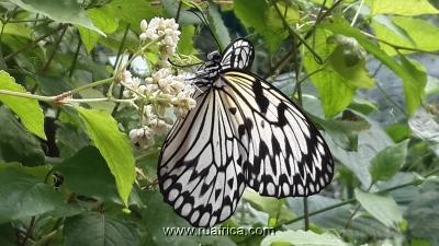 ферма бабочек юар