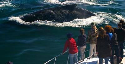 круиз китов юар