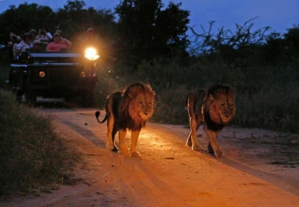 ночное сафари в Крюгере