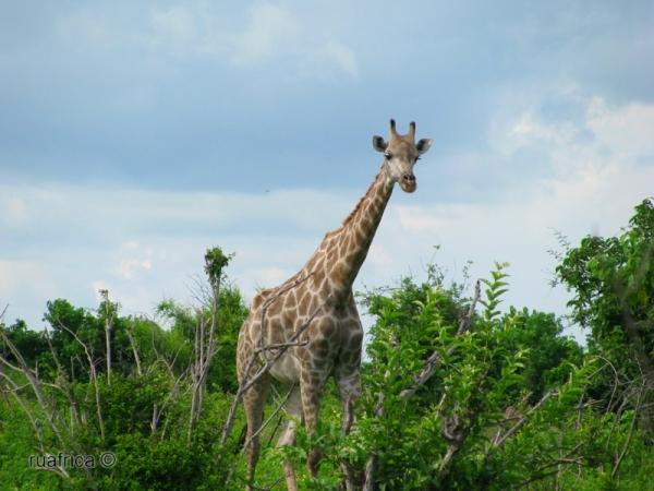 сафари в Ботсване