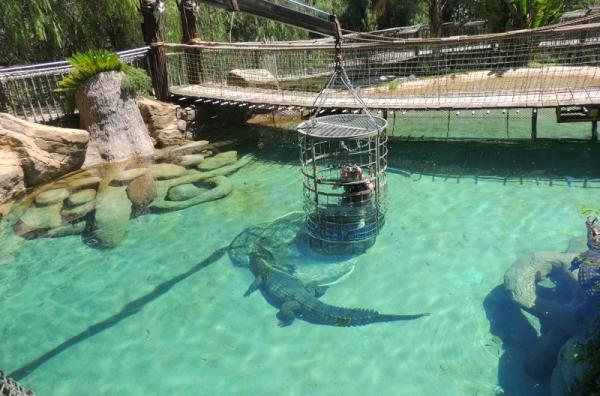 ныряние с крокодилами
