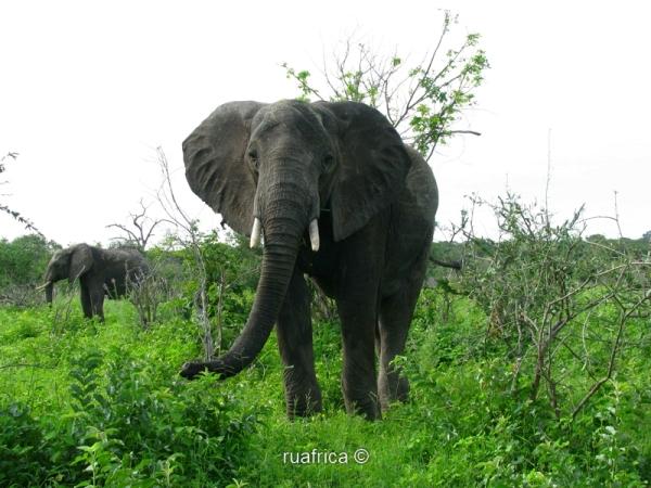 слоны в Парке Чобе