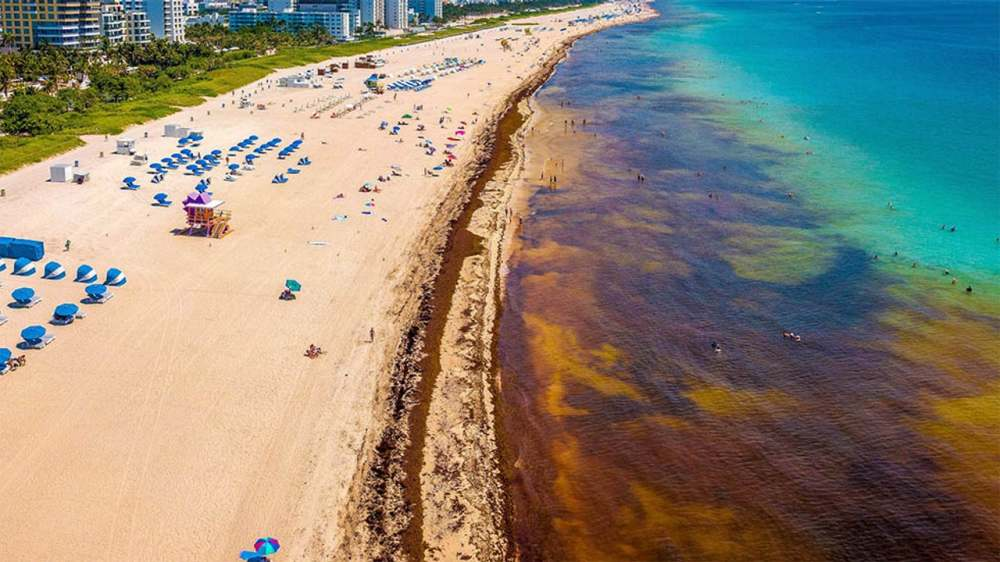 Sargassum Superbloom Is Stinking Up Florida