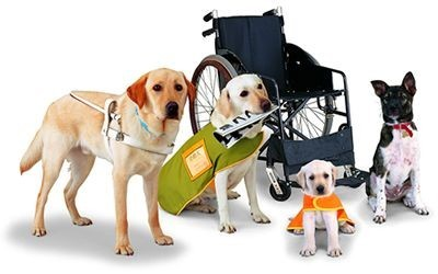 HUD working on verification plan for service animals