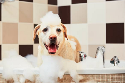 Tips on Eliminating Pests on your Dog