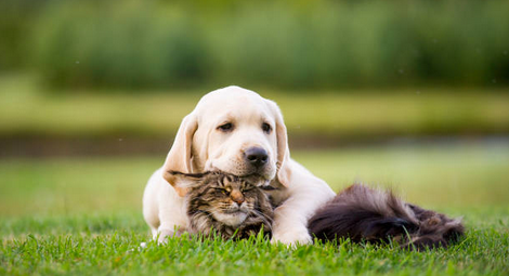 Choosing a Pet Booking Site
