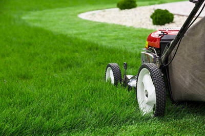 Reasons to Get Lawn Care Services