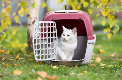 Learn More about Small Pet Supplies