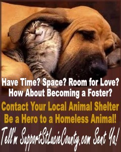 Become a Foster Parent to Shelter Animals