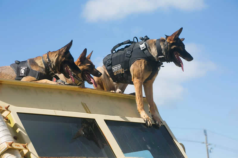 Frogman Foundry | Canines in Combat at The National Navy UDT SEAL Museum