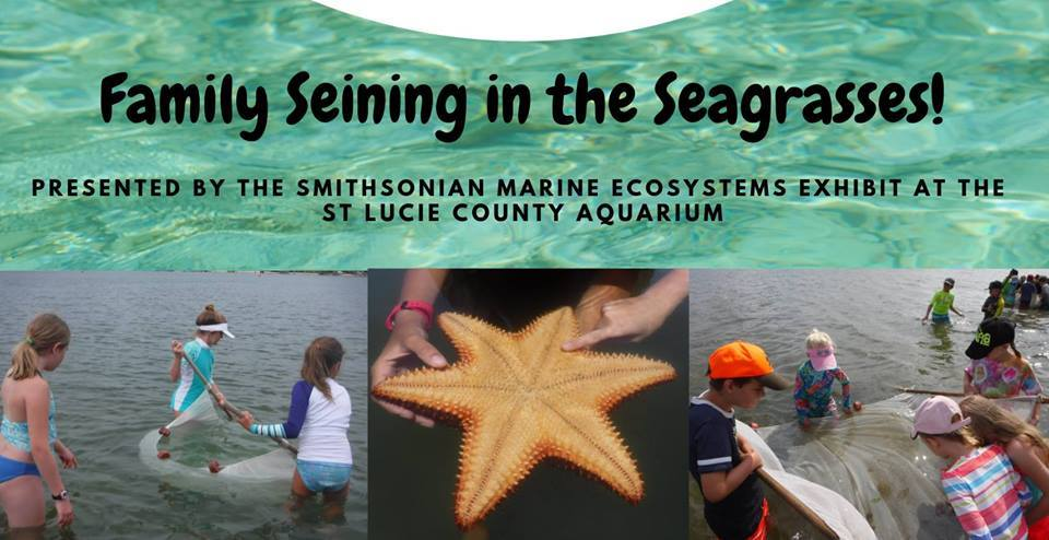 Family Seining in the Seagrasses at Smithsonian Marine Ecosystems Exhibit at the St Lucie County Aqu