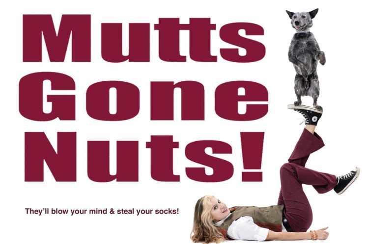 Mutts Gone Nuts at The Lyric Theatre