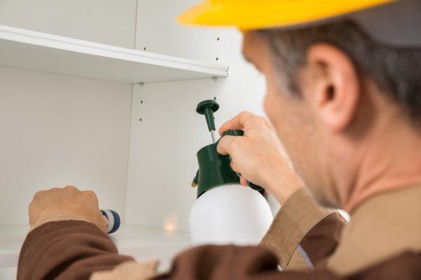 How Often Should Pest Control and Management be Done