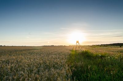 Tips for Hiring the Best Real Estate Company to Help in Acquiring Farmland in Northwest Iowa