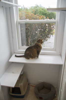 Cat Condo with Window.
