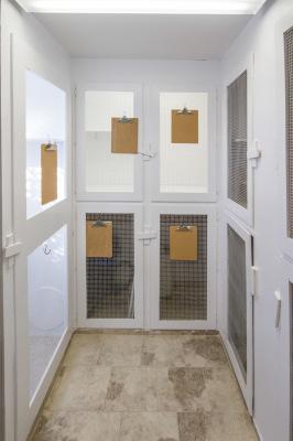 Cat Condo Room