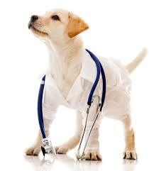 Factor to Deem When Hiring the Best Vet for Wholistic Care Service
