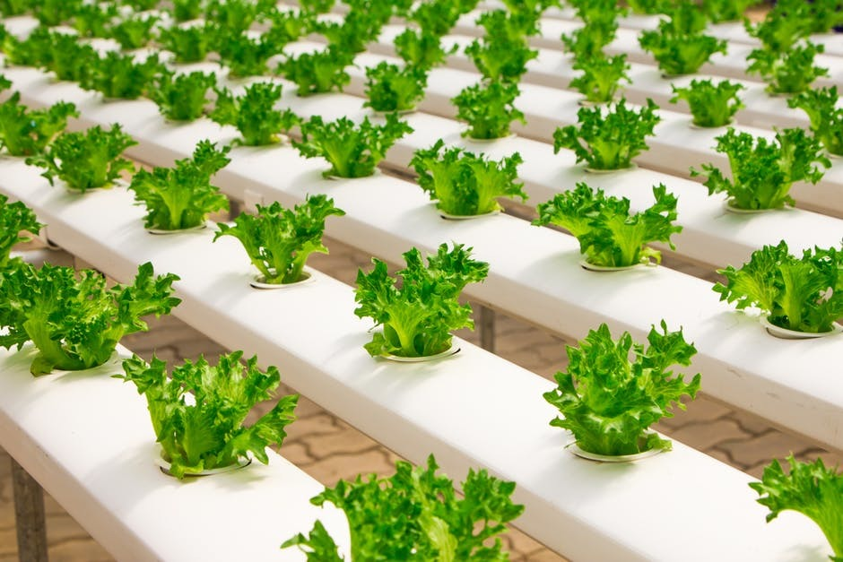 Essential Things to Know About Vertical Farming