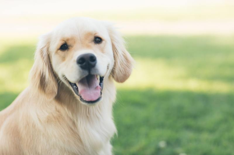 What You Need to Know about Dog Articles and Products