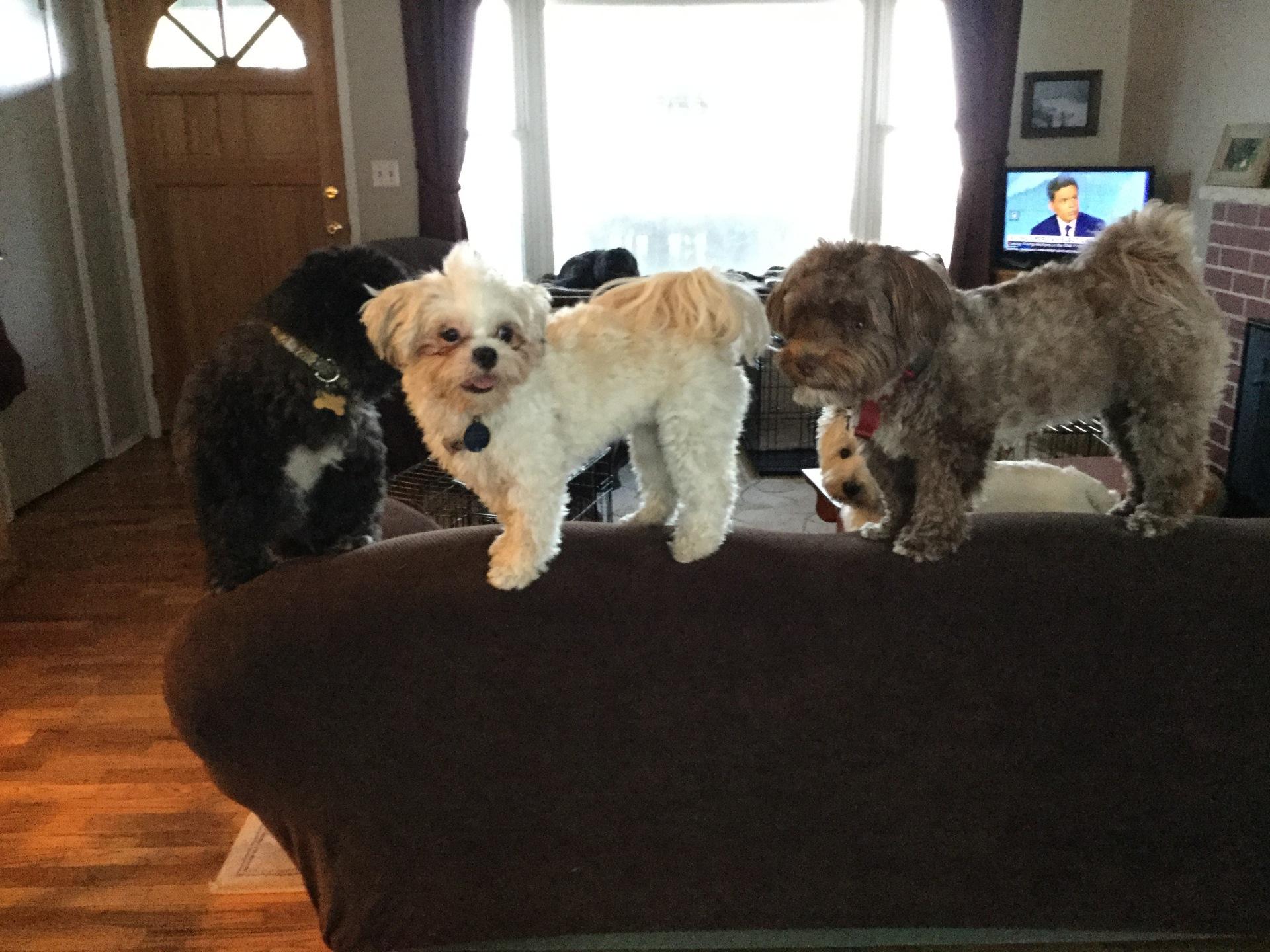 small dogs having fun