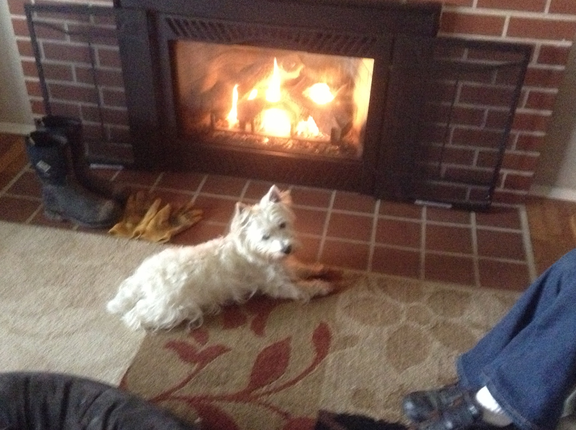 senior dog resting by fire place