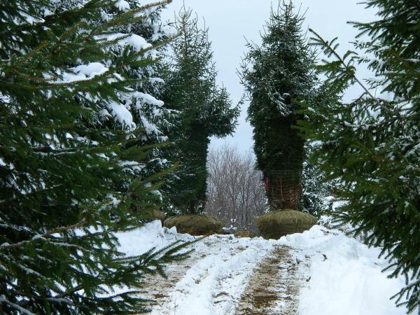 Winter Digging