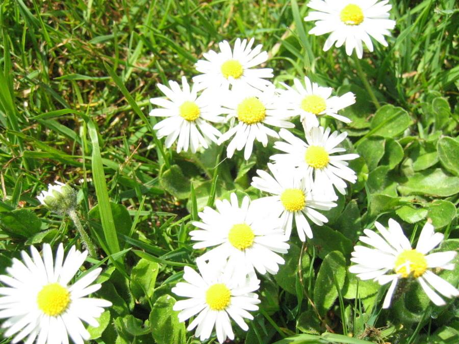 Sedge Fen--April 2006