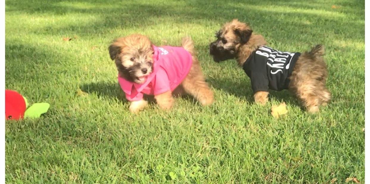 Benny & Precious