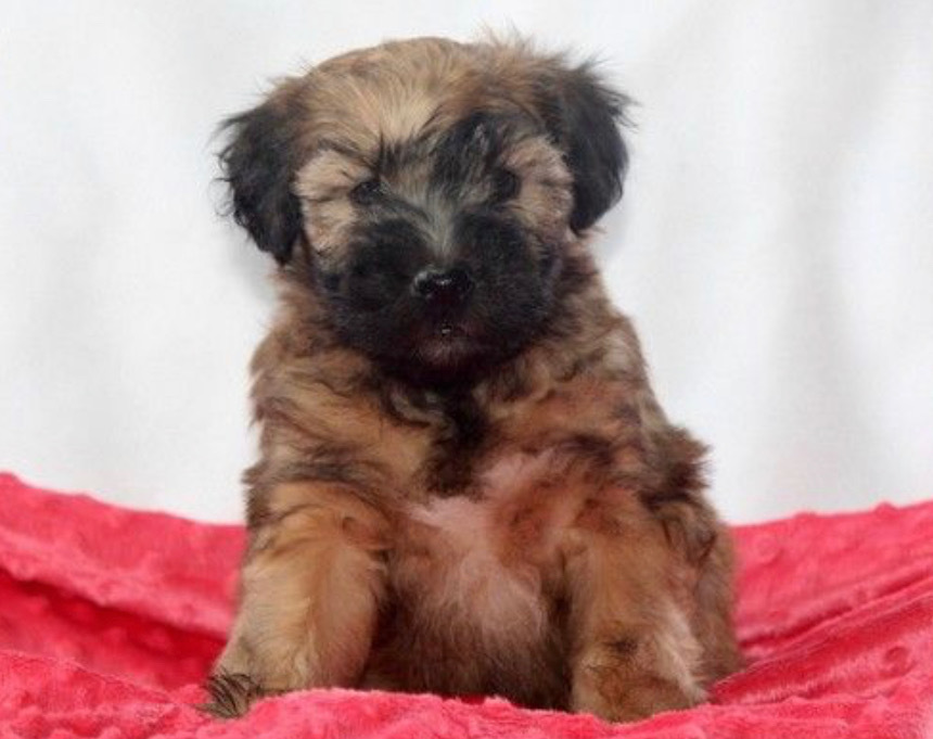 Wally - Male       Price: $1850