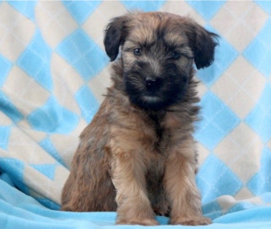Wesley - Male Price: $1850