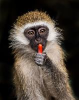 Photo   Monkey   David Clode